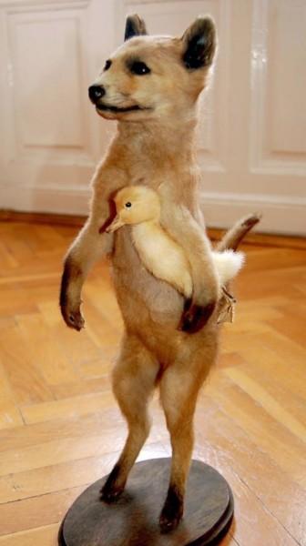 FoxwithDuck