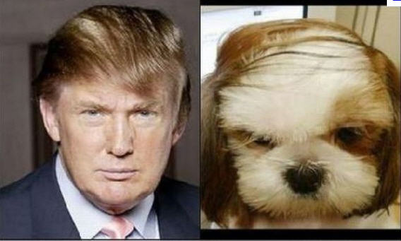 donald_vs_dog